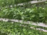 供应别墅楼顶农场阳台庭院绿色菜园兰天兴农 无土栽培设备