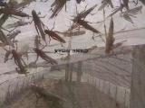 蝗虫养殖网 蚂蚱养殖聚乙烯网厂家自产自销支持定做
