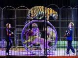 马戏团表演项目出租马戏动物高端杂技演出团队租赁
