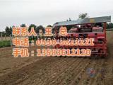 红薯栽苗机厂家|栽苗机|军岩农业机械(查看)