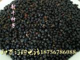 射干种子育苗一亩地15公斤