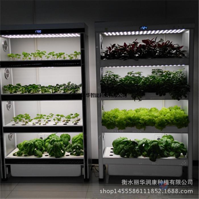 智能蔬菜种植机无土栽培设备家庭水培