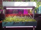 智能蔬菜种植机家庭无土栽培设备 水培蔬菜设备家庭园艺机