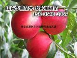 供应 4公分桃树苗基地