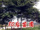 朴树价格[参考表]