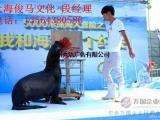 海洋生物展活动宣传海洋主题鱼缸展企鹅展海狮表演出租