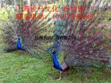 百鸟展活动策划鸟类展览表演出租鹦鹉鸵鸟表演
