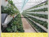 温室基质槽 草莓立体种植槽 可定制
