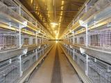 鲁兴养殖设备 鸡笼