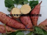 红薯种苗销售/光发甘薯sell/红薯种苗销售