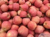 红富士苹果网 冷库红富士苹果批发价格