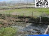 登隆青蛙养殖围网 1.2米青蛙围网  真实厂家