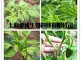 蔬菜病毒病特效药