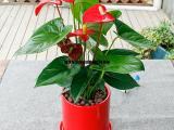武汉地区的各种花盆,可放各类型的植物,有不同材质,可以自提