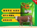 牛精料价格/肉牛精料多少钱一袋