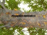 侵染性桃树流胶病、黄瓜流胶病等等流胶病防控用龙灯生物溃腐康