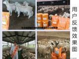 羊育肥//小尾寒羊育肥//小尾寒羊快速育肥