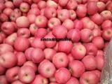 处理冷库条纹红富士苹果,75红富士苹果今日处理价格