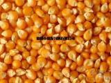 仙发饲料厂求购玉米豆粕棉粕麸皮次粉油糠等饲料原料