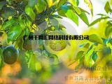 绿色乐园蜜桔平台系统开发