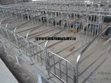 厂家批发母猪定位栏长胜养猪设备母猪定位栏供应商