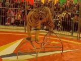 大型马戏团节目演出价格动物杂技表演大棚全套出租