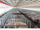 CS母猪定位栏供应商母猪定位栏养猪设备母猪定位栏批发