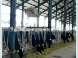 畜牧养殖设备 牛场用牛颈枷 自锁式牛颈枷及配件