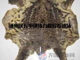 蟾皮 蟾蜍皮的质量鉴别