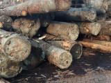 批发铁杉建筑木方