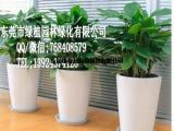 供应花卉租摆万年青 垂直绿化 室内外绿化养护 东莞租花