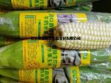 北京台湾牛奶玉米销售