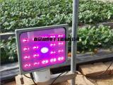 新款8W植物生长灯 低耗电大面积补光灯