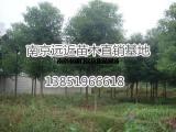 更新发布香樟树基地价格