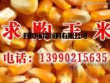饲料企业常年收购玉米