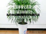供应花卉租摆龙铁树 垂直绿化 室内外绿化养护 东莞租花