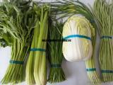 蔬菜捆扎机甘鲁无胶捆菜机全自动包香机粉条粉丝打包机超市扎把机