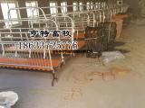 猪场专用复合漏粪板母猪产床仔猪床厂家