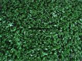 西安仿真草坪,西安仿真草坪价格,人造草坪