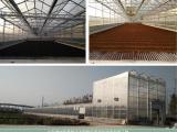 煜林枫太阳能皮革污泥干化