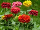 花坛花卉,节日花卉,广场花卉组摆造型设计批发采购@茗茜花卉
