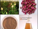 玫瑰花提取物 玫瑰花粉 OEM代工