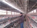 养殖场消毒成套设备通宝专业
