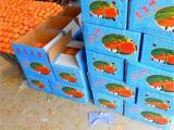大量大磨盘柿子供应 价格合理 交通方便