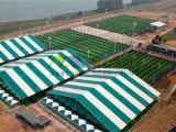 大型装配式体育帐篷定制