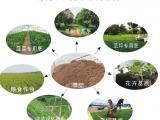 太阳能污泥干化系统使污泥土地利用降低风险