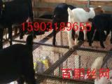 养肉鸡网床@养殖场钢丝漏粪网床@鸡鸭鹅用养殖钢丝网厂家