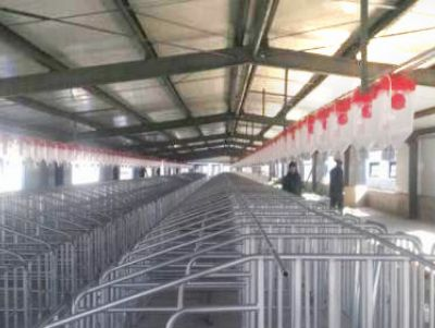 自动化养猪设备厂家 呼伦贝尔养猪设备 双联机械