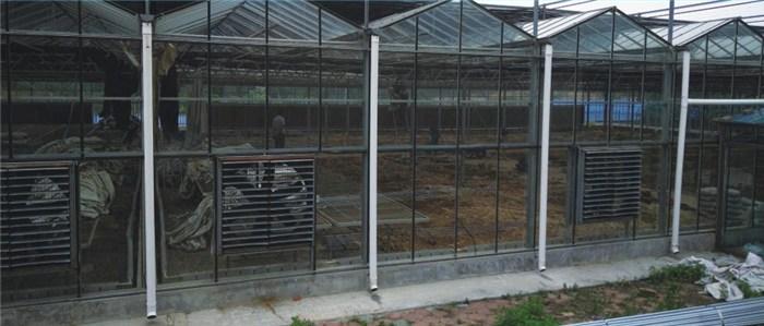 玻璃温室大棚工程 延安玻璃温室大棚 鑫凯农业价格透明