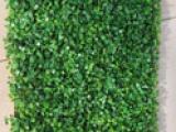 厂家批发供应足球场草坪